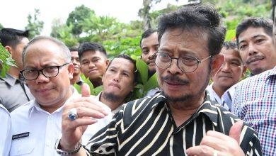 Photo of Optimalkan Lahan, Mentan Syahrul Sarankan Lakukan Intercropping