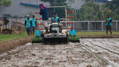 Photo of Kementan Dorong Perlakuan Benih Padi Sebelum Penanaman Agar Menghemat Ongkos Produksi