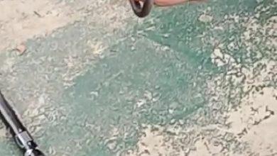 Photo of Warga Perumahan Royal Citayam Residensial Diteror Puluhan Ular Jenis Kobra