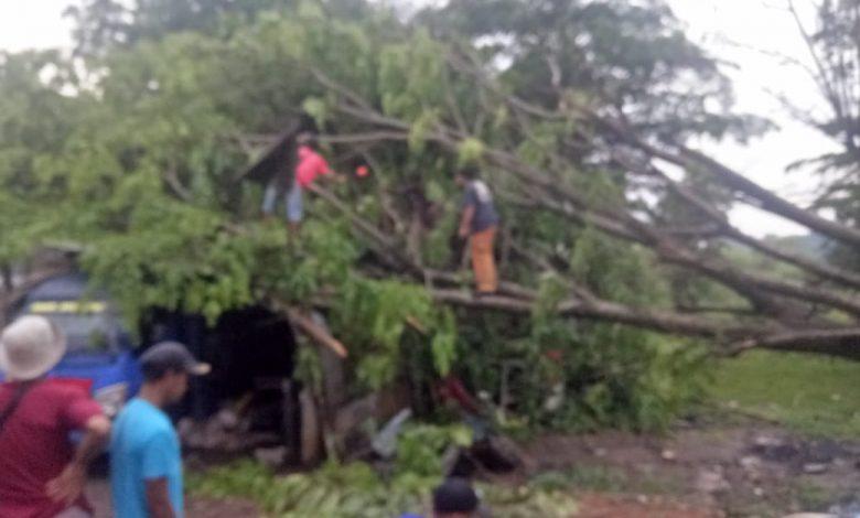 Photo of Dua Pohon di Depok Tumbang Akibat Hujan Disertai Angin