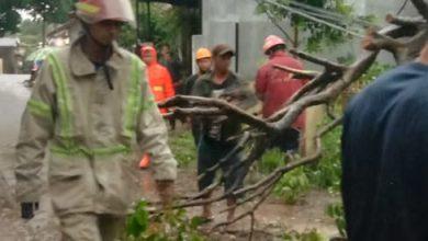 Photo of Hujan Deras Disertai Angin Kencang Landa Kota Depok, Sejumlah Pohon Tumbang