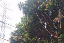Photo of Heboh! Seorang Pria di Depok Teriak-teriak Seperti Jagoan di Atas Pohon